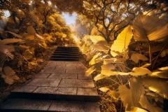 《莲花山公园》